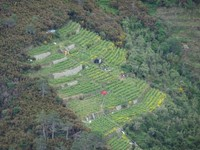 Vignoble à flanc de colline