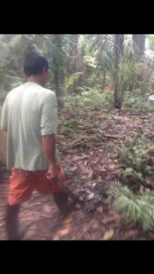 Jungle alberto walking