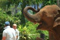 Elephant at Taronga Zoo, Sydney