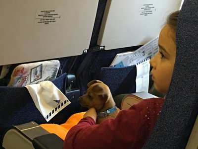 0940_tues_dog_plane.jpg
