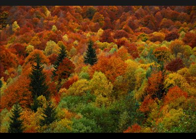 apline_autumn.jpg