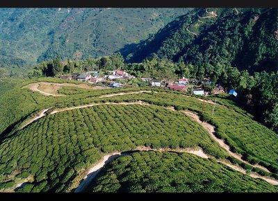 darjeeling_tea.jpg