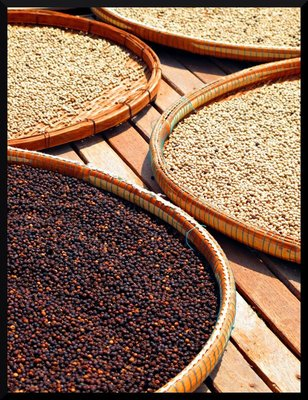 dry_kampot_peppers.jpg
