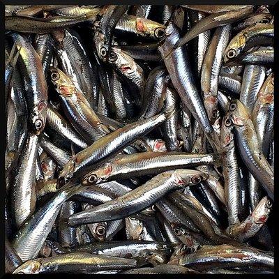 sardines_market.jpg