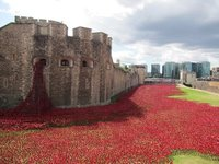 The poppies at the Tower of London