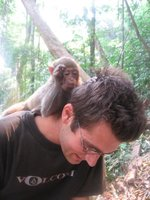 The pet monkey liked to pick through my hair