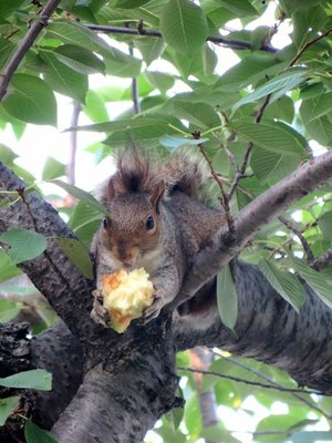 Today's Feature Squirrel