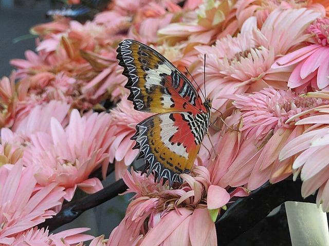large_1_13917062..y-butterfly.jpg