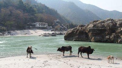 Ganges menagerie
