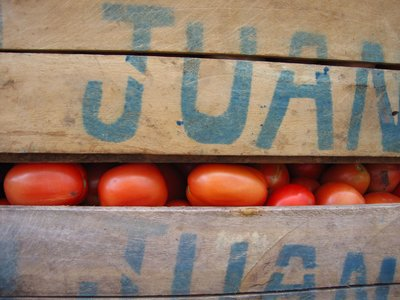 Honduran Tomatoes