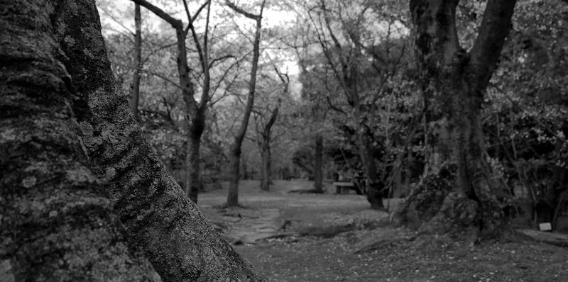 large_16__Hirosh..tle_grounds.jpg