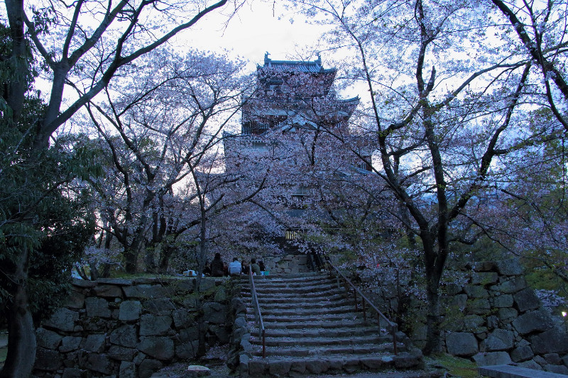 large_17__Hanami..hima_Castle.jpg