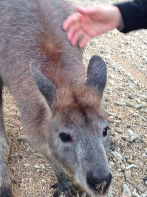 Oh, hello kangaroo