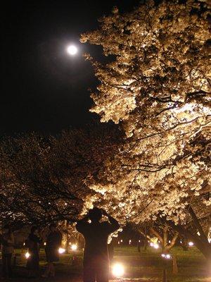 Kyoto_I__244_.jpg