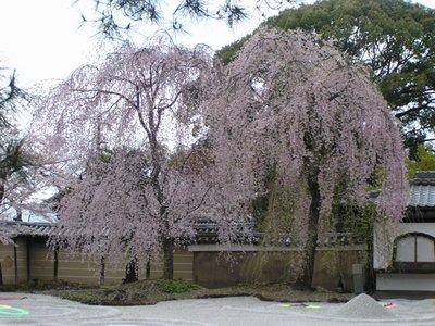 Kyoto_I__331_.jpg