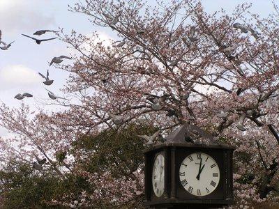 Kyoto_I__99_.jpg