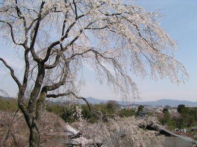 Kyoto_Part_III__56_.jpg