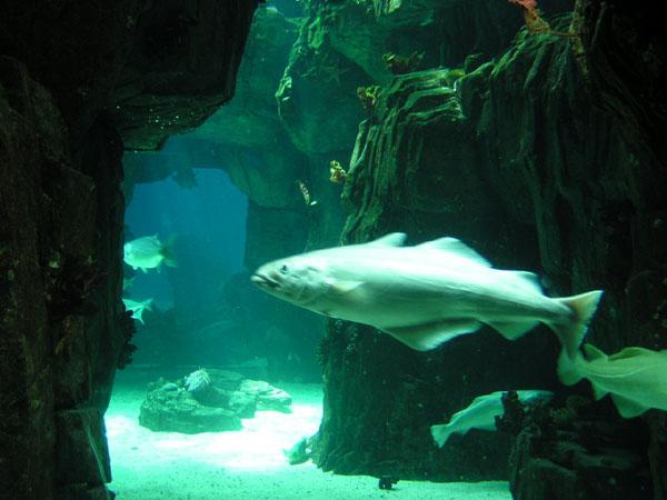 Big Fish Oceanarium