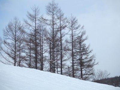 otaru_winter_22.jpg