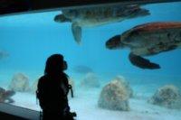 Okinawa Churaumi Aquarium - Big Turltes