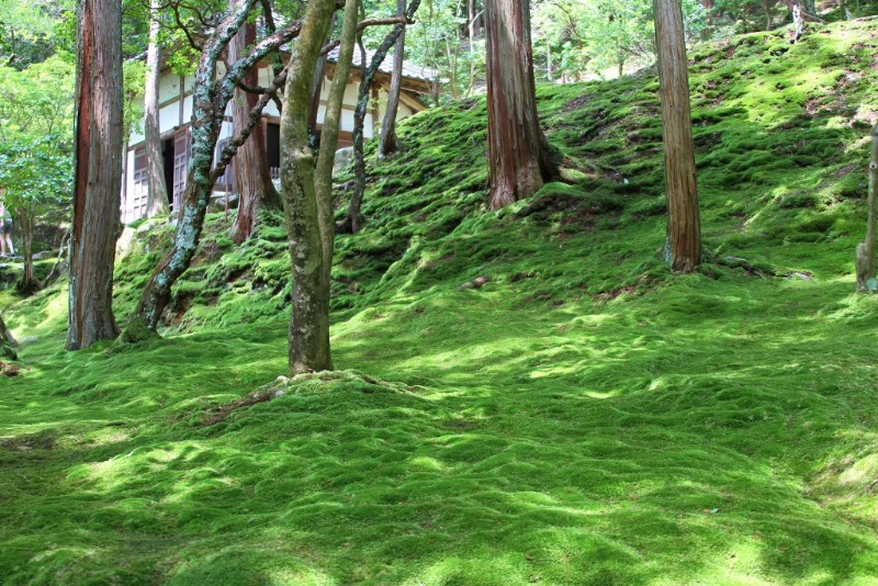 Kokedera Moss Temple, Japan