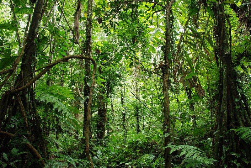 The Jungle 1