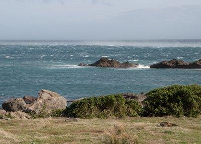 Cape Palliser_8