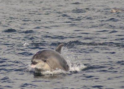 Dolphin_3.jpg