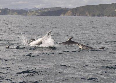 Dolphin_8.jpg