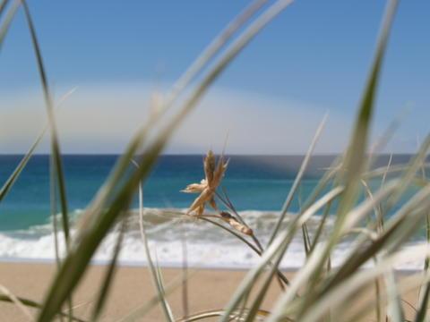 Est coast, North Sydney