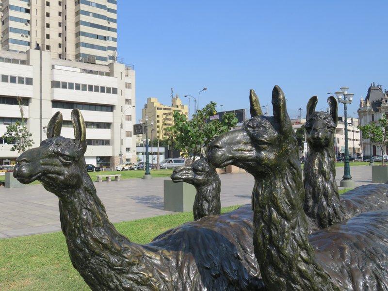 Llamas - Grau Plaza