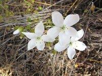 Wildflowers @ Elachbutting Rock
