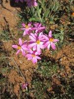 Wildflowers @ Marshall Rock
