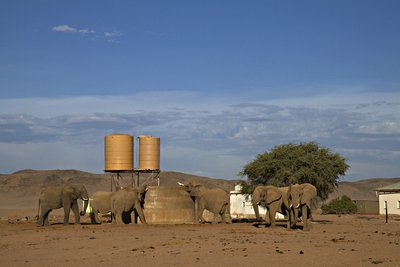 Elephants and farmers share land in Namibia