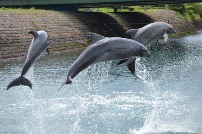 Sorry für die vielen Delfin-Föteli, aber ich LIEBE Delfine ;-) (Editor: birdfish :-D )