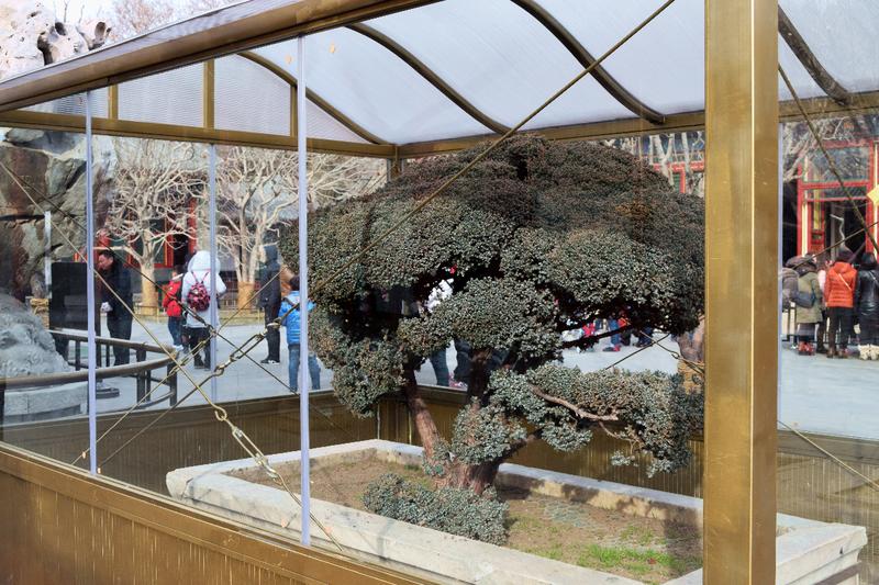 large_Summer_Palace_Bonsai_Tree.png