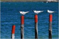 Each on his perch...