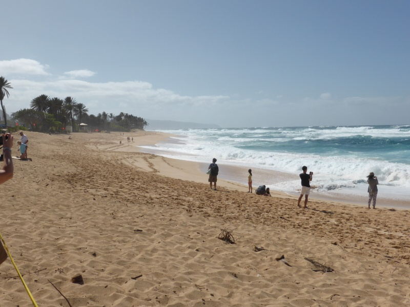 Surfing competition beach