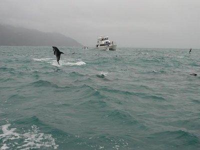 Dolphin_jumping.jpg