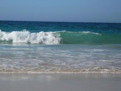 seals_rock..surfing.jpg