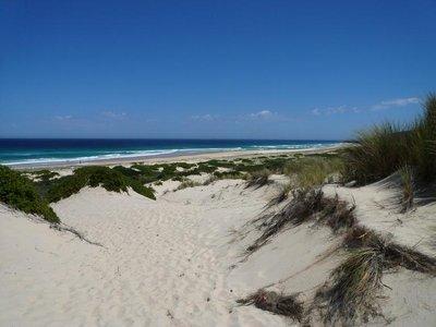 Aus - Seals Rock Sand Dunes