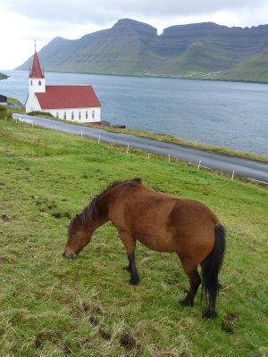 Horse and church, Husar, Kalsoy