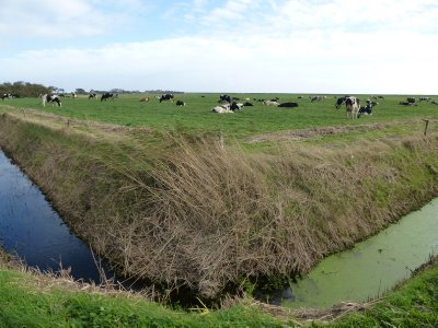 Dutch landscape on Terschelling