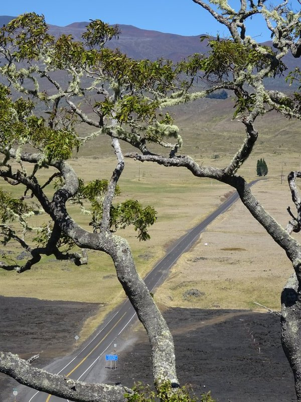 Excess Road from Saddle Road towards Mauna Kea