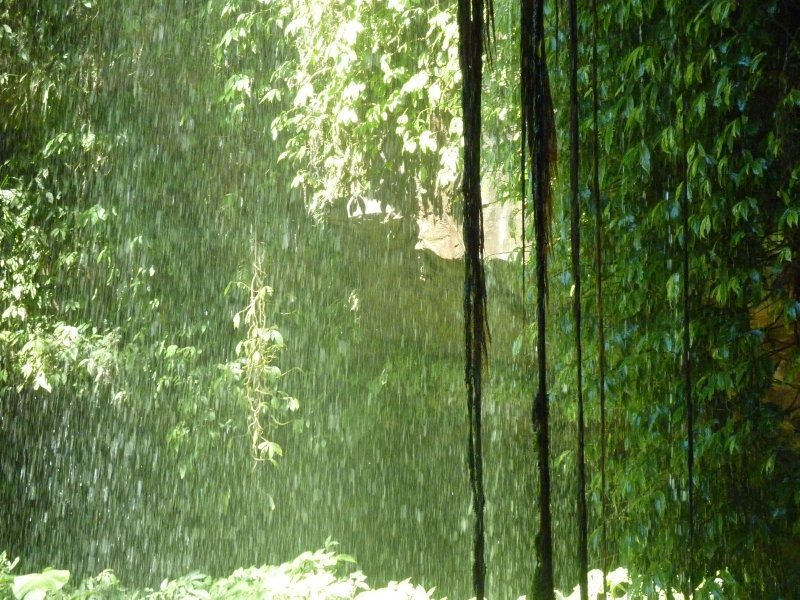 Behind a waterfall, Dorrigo NP