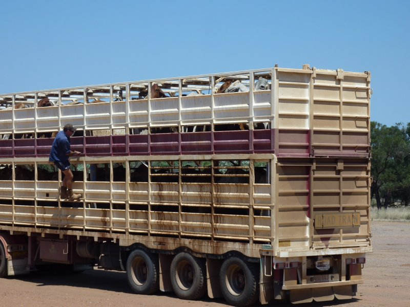 Climbing his Road Train, Burke and Wills Roadhouse
