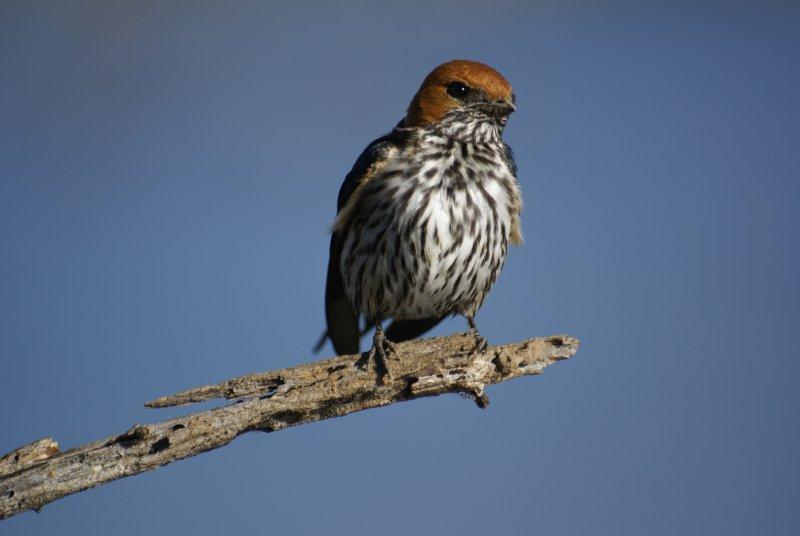 Beautiful bird in Pilanesberg Park