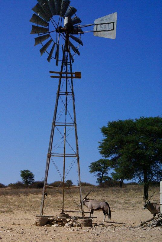 Gemsbok at Kalahari Waterhole