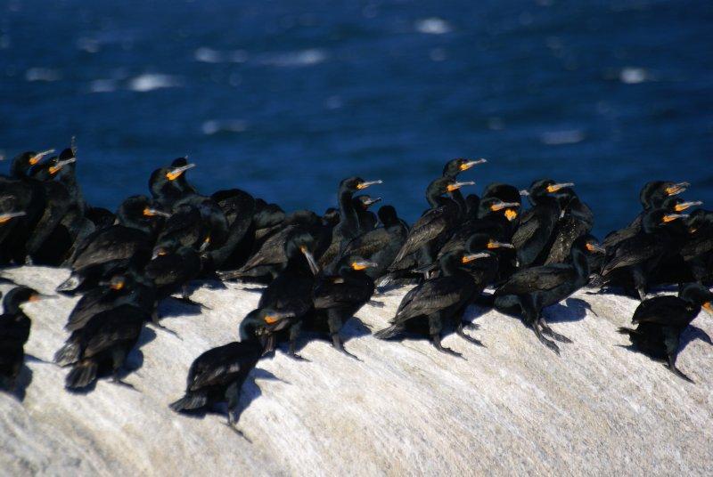Birds at Simon's Town