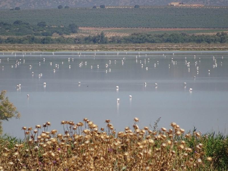 Flamingos at Laguna Fuente de Piedra